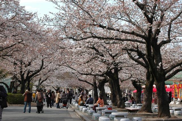 桜前線を追え! 中部有名お花見スポット特集!