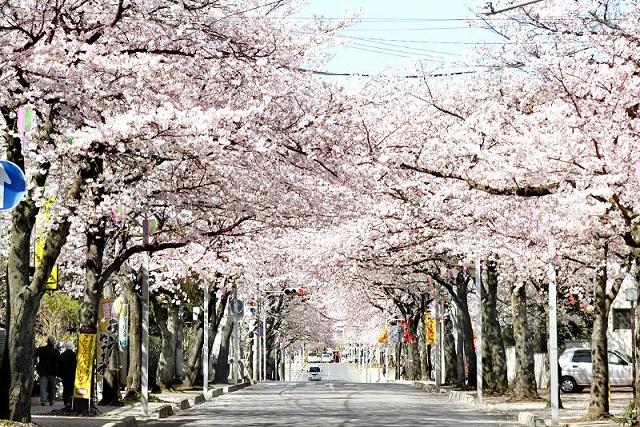 今が旬! 関東7県のお花見スポット!