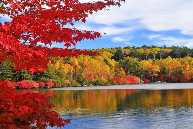 秋は紅葉狩りデート 日本の紅葉の名所
